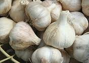 Garlic Supplements Benefits