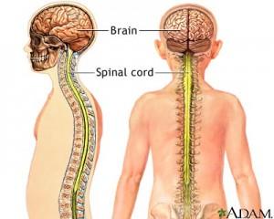 lecithin brain and nerves