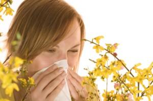 Alfalfa and allergies
