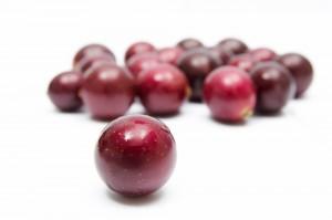 resveratrol grapes